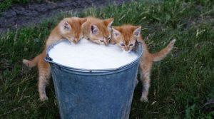 舌尖上的30个集装箱进口牛奶