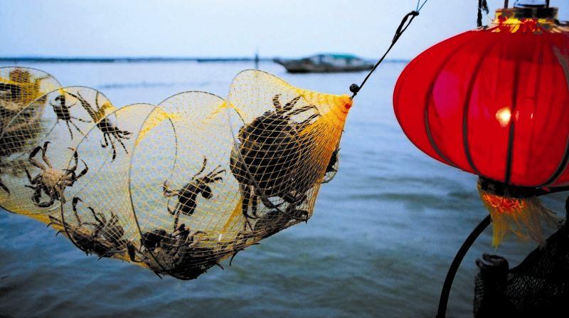 巨头掀起大闸蟹之战,中小创业者是否仍有机会涉足生鲜零售?